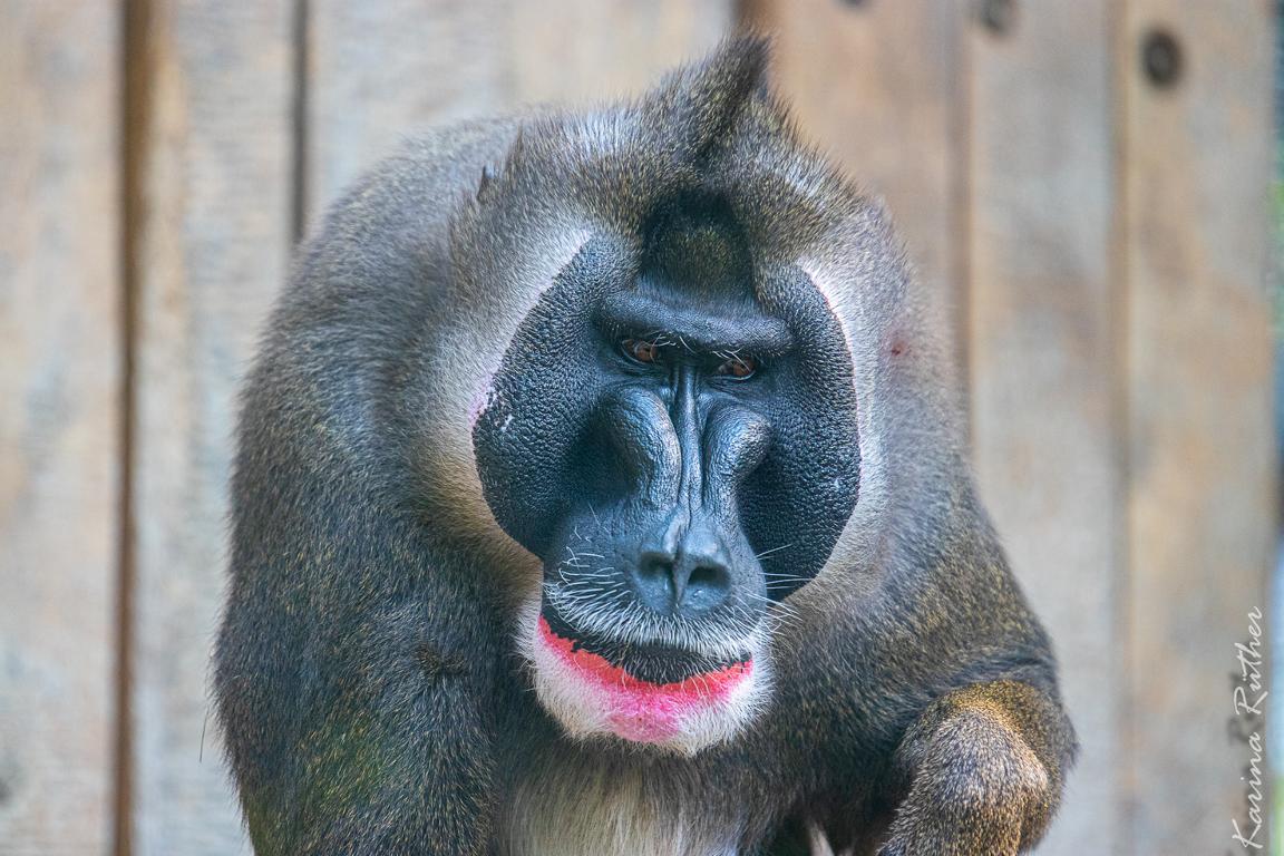 Der grüne Zoo Wuppertal – Bildergalarie 01.09.19